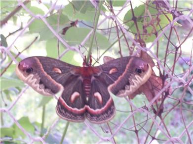 butterfly2-6-09.jpg