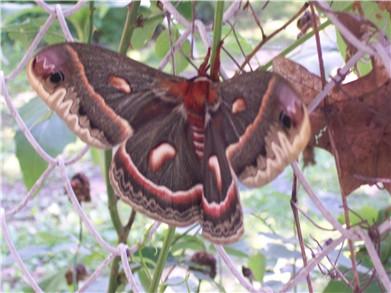 butterfly6-09.jpg